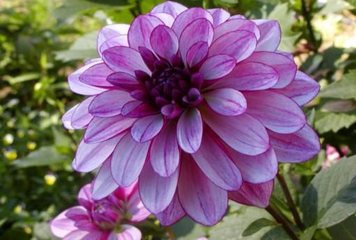 cuales-son-las-flores-de-verano