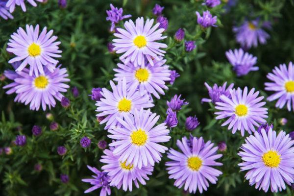 Cu 225 Les Son Las Flores De Oto 241 O Erenovable Com