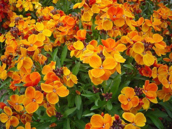 Cu les son las flores de invierno for Plantas para invierno
