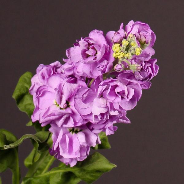 Cuales Son Las Flores De Invierno Erenovable Com