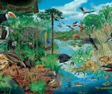 Ecosistemas – Qué son, tipos y para qué sirven