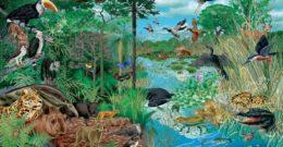 Qué son los ecosistemas