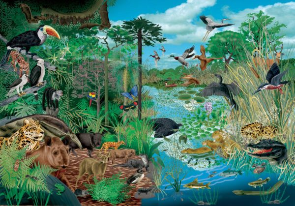 Qu son los ecosistemas - El tiempo en macanet de la selva ...
