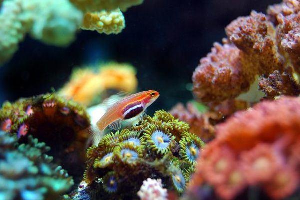 como-decorar-un-acuario-con-materiales-reciclados-arrecife