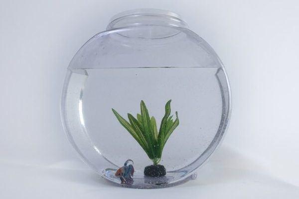 como-decorar-un-acuario-con-materiales-reciclados-pecera