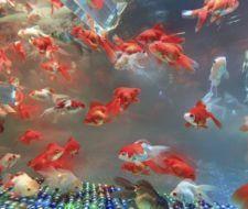 Consejos para decorar un acuario con materiales reciclados