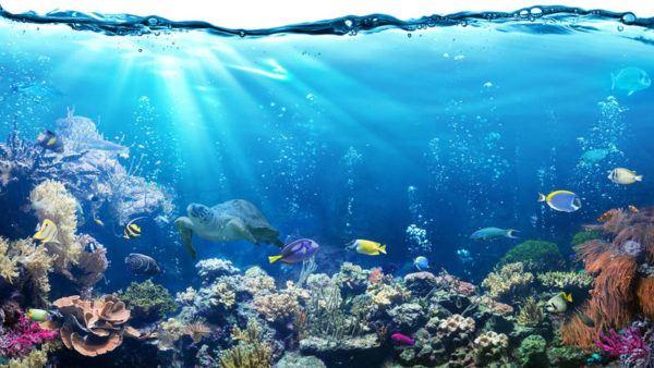 Ecosistemas ejemplos