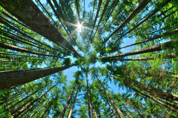 Ecosistemas que son