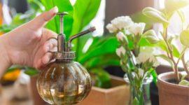 Los 8 mejores insecticidas naturales y caseros para cuidar tu jardín