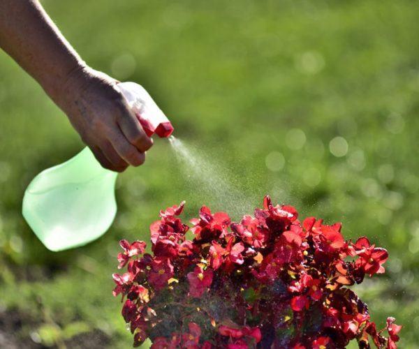 Insecticidas naturales jardin