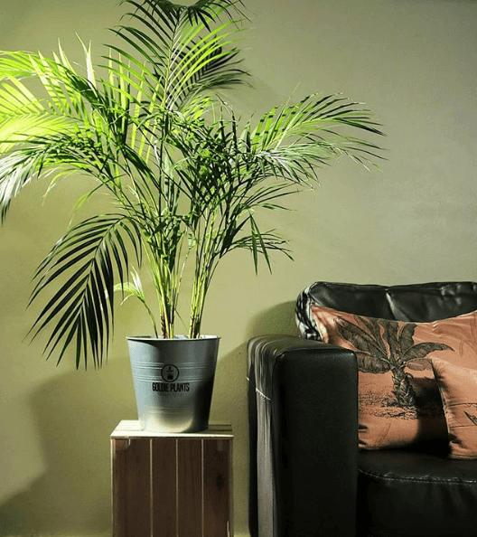 Las mejores plantas de interior para purificar el aire - Plantas de interior que purifican el aire ...