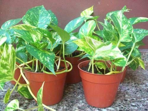 Las mejores plantas de interior para purificar el aire - Las mejores plantas de interior ...