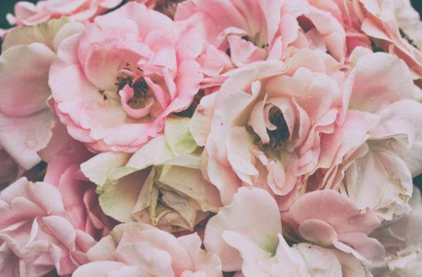 Flores de primavera rosas