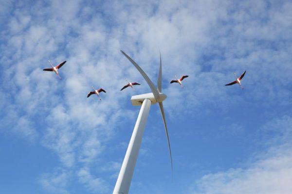 ¿Es verdad que los parques eólicos matan pájaros?